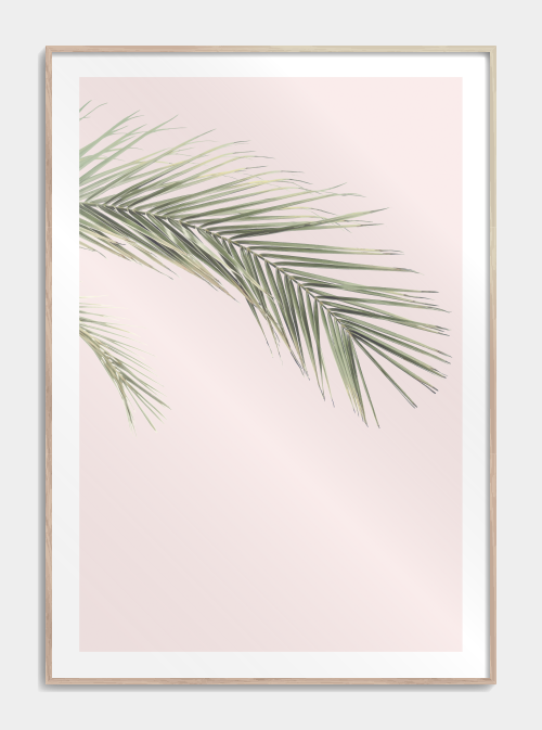 Palm leaf in pink plakat No2