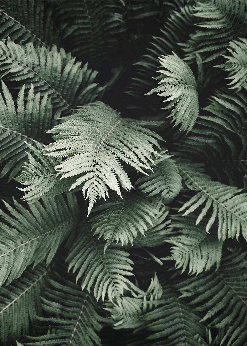 Billede af Tropisk bregne plakat