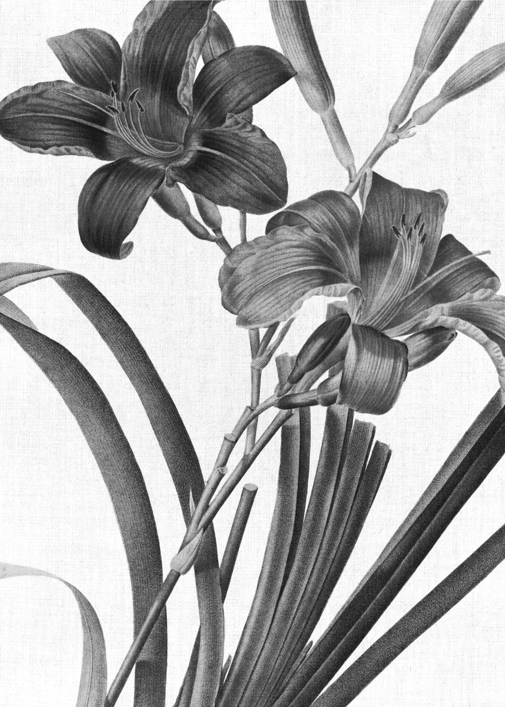 Billede af Black lilies plakat