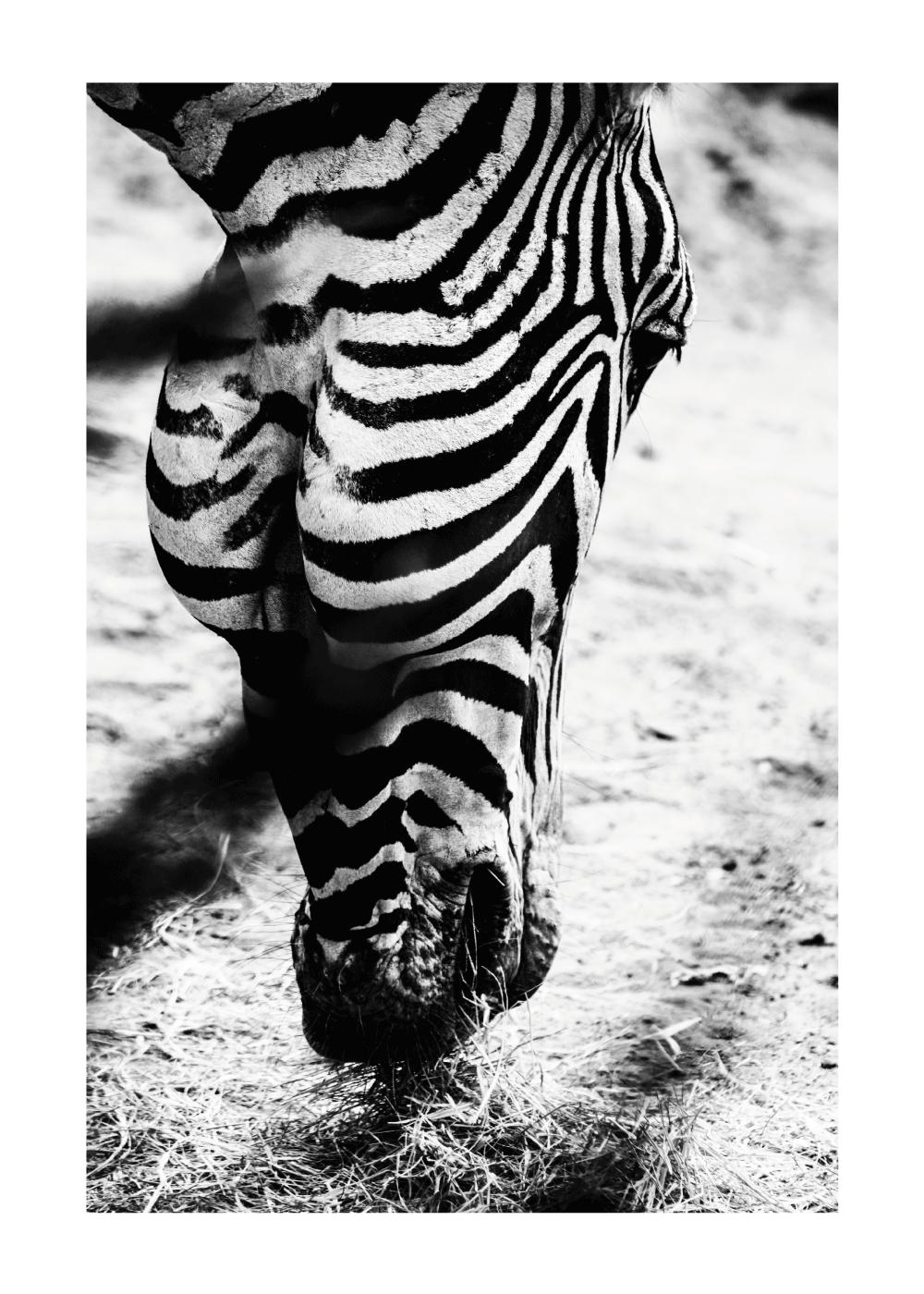 Zebra - plakat