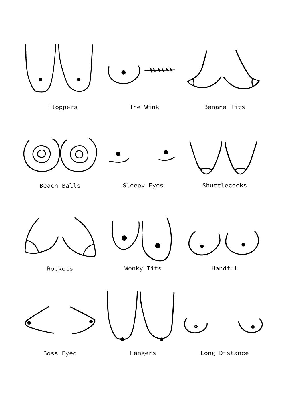 Billede af Types of Boobies plakat