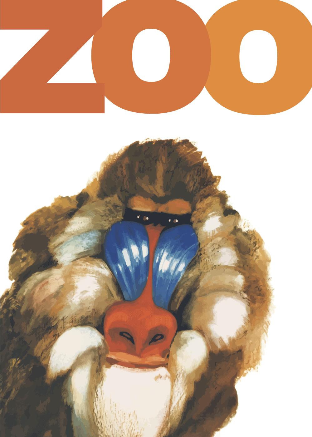 Zoo plakat - Bavian