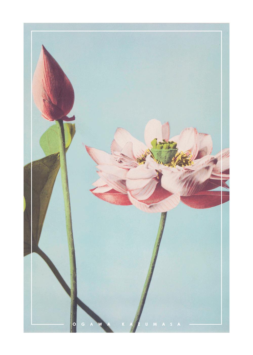 Billede af Lotus Flowers - Japansk fotokunst plakat